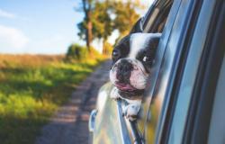 Vakantie met de hond aan het Gardameer: activiteiten om te doen