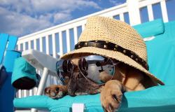 Vakantie aan het Gardameer met uw hond